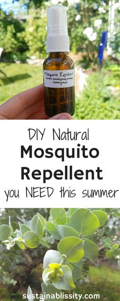 The only natural, DIY, Non-toxic mosquito repellent you need this summer. Made with citronella, lemon eucalyptus, and lemongrass essential oils. Essential Oils For Mosquitoes, Mosquito Repellent Essential Oils, Essential Oil Bug Spray, Citronella Essential Oil, Citronella Oil, Lemongrass Essential Oil, Essential Oil Blends, Home Made Mosquito Repellent, Mosquito Spray