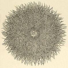Echinodermata art to study science