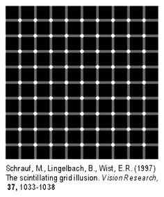 Scintillating grid illusion - Illusory black dots appear to scintillate in white circles.