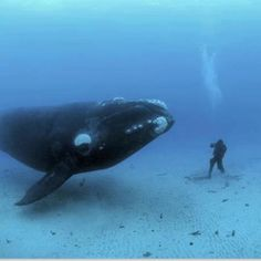 Incontri marini - What is the polite thing to say to a whale when you meet him?