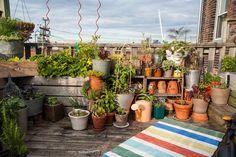 Jardin vertical au balcon – aménagersapetite oasisde verdure
