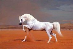 The Beautiful Arabian: Horse of the Desert. Beautiful Arabian Horses, Most Beautiful Horses, Majestic Horse, Pretty Horses, Horse Love, Animals Beautiful, White Arabian Horse, Marwari Horses, Arabian Stallions