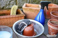 Clean pots and pans with home remedies and overwinter plants properly - New Diy Balcony Main Food Groups, Clean Pots, Window Box Flowers, Baking Soda Uses, Pregnant Diet, Pallets Garden, Edible Flowers, Balcony Garden, Amazing Flowers