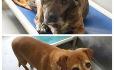 'Just junkyard dogs': Owner never bothered to leave their names • Pet Rescue Report