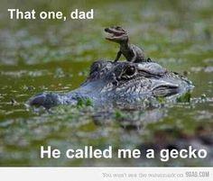 Never call a baby alligator a gecko O_O