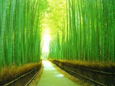 Kyoto - Bamboo Groves