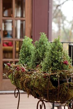 Use rosemary topiaries as a fragrant holiday accent for your porch or home… Christmas Makes, Merry Little Christmas, Country Christmas, All Things Christmas, Beautiful Christmas, White Christmas, Christmas Holidays, Christmas Crafts, Christmas Decorations