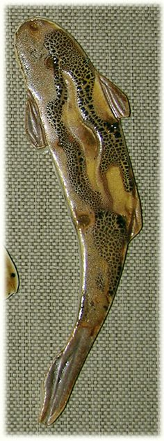 site:www.tileswithstyle.com | Your top view - dorsal view trout tiles don't have to be the colors ...