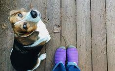 Scarica sfondi pavimenti in legno, cane, autunno, look