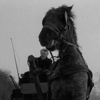 "Egosystem: ""Dead horses"" by egosystem_ on SoundCloud"