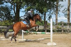 Cindy hadnt jumped in 12 years! Looks like she's still got it! Cross Country Jumps, How To Gain Confidence, Horses For Sale, Horse Riding, Europe, America, Animals, Animaux, Animal