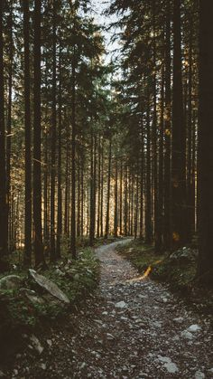 Sunbeams, morning, forest, pathway, nature, 720x1280 wallpaper