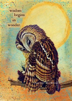 Wisdom begins in wonder, so true. Owl artwork on etsy. Animal Spirit Guides, Spirit Animal, Owl Quotes, Bird Quotes, Quotes Images, Wisdom Quotes, Owl Always Love You, Owl Pictures, Wise Owl