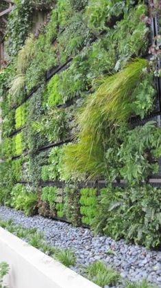 Living wall built using modules by Tournesol siteworks