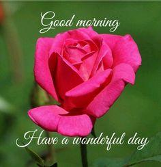 2529 best good morning images on pinterest morning greetings morning qoutes good morning messages good morning everyone good morning wishes morning blessings morning images good morning greetings good morning m4hsunfo