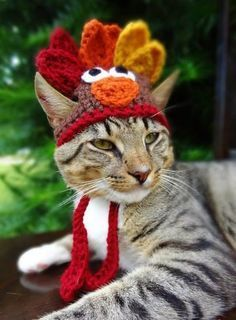 Turkey Cat Hat, Turkey Cat Costume - The Thanksgiving Turkey Hat for Cats and Small Dogs - Turkey Costume for Cat, Turkey Hat for Cat Costume Chat, Pet Costumes, Funny Thanksgiving Memes, Thanksgiving Turkey, Happy Thanksgiving, Sweet Cat, Turkey Hat, Cat Hat, Cat Colors