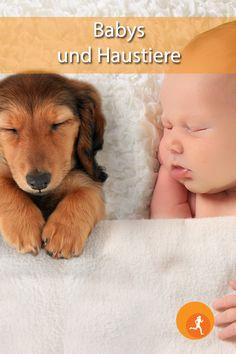 Bei Ihnen hat sich Nachwuchs angekündigt, zugleich sind Sie aber auch Tierbesitzer? Zuerst einmal möchten wir Ihnen herzlich gratulieren. Wir hoffen, dass wir Ihnen hier einige Aspekte liefern können, die Ihnen das spätere Zusammenleben mit Baby und Tier ermöglichen. Es gibt für Kinder kaum etwas Schöneres, als ein echtes Tier als Spielgefährten zu haben.   #baby #hund #katze #tiere #gefahr #gewöhnen #spielen #vorsicht #aufwachsen #kontakt #aufpassen #spazieren #krankheit #impfen #fit… Fit, Mickey Minnie Mouse, Dog Cat, Shape