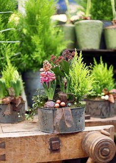Joulun kukat tuovat kotiin juhlan tuntua ja tuttuja sulotuoksuja. Jouluista tunnelmaa saa yhden kukan istutuksilla ja koristelluilla havukransseilla. Katso Viherpihasta!