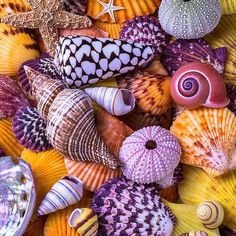 aesthetic, background, beautiful, colorful, pink, purple, seashell, shells, textures, yellow