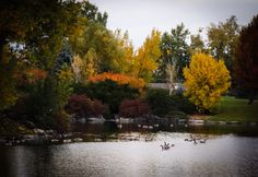 Addenbrooke Park, Lakewood Colorado