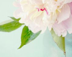 Ethereal Peony Photograph Floral Art Print Flower by JudyStalus