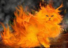 Resultados da Pesquisa de imagens do Google para http://www.scenicreflections.com/ithumbs/Fire_Cat_Wallpaper_mdsa4.jpg
