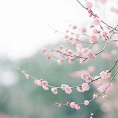 #цветы от #mypositivestyles #myps