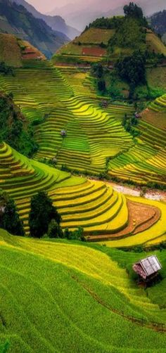 The terraced rice fields of the Muong Hoa Valley near the town of SaPa in northwest Vietnam.
