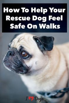 Is your new addition anxious on walks? #dogcare