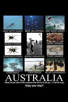 Tourist in Australia Goes Viral Holding 'Beautiful' Octopus That Can Kill Within Minutes Outback Australia, Australia Funny, Australia Travel, Redback Spider, Meanwhile In Australia, Drop Bear, Aussie Memes, Deadly Animals, Dangerous Animals