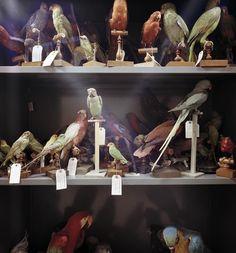 Museum of Natural History, Paris, France, 1982