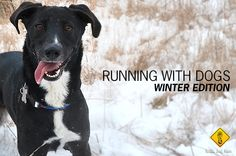Running with dogs in the winter Winter Running, Puppy Face, Stay Fit, Jogging, Labrador Retriever, Faces, Puppies, Workout, Dogs