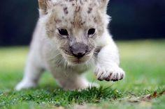 photos of baby animals   Fierce huh?? ;0