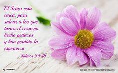 Los ojos del Señor están sobre los justos...Salmos 34:18
