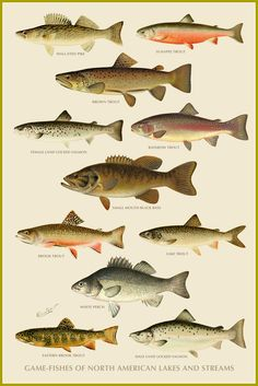 Game Fishes of North American Lakes and Streams | Free Printables for personal use only!