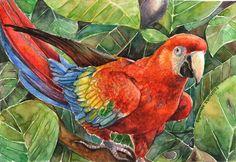 Scarlet Macaw by thaomani on deviantART ~ tropcial art watercolor Watercolor Animals, Watercolor Paintings, Watercolour, Tropical Art, Cockatoo, Grumpy Cat, Bird Art, Pet Birds, Parrot