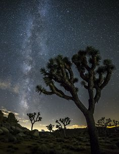 Night Sky and Astro-Photography is always amazing in the park! Check out our B&B Workshops in Joshua Tree. Learn Astro, Landscape & Timelapse Photography in the Park! See you under the Stars!