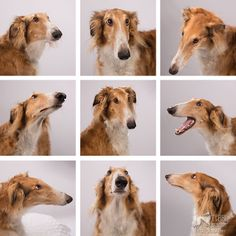 The faces of Timber