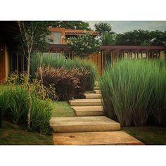 #mulpix Privacidade para a entrada da casa Capim-do-Texas rubro e Capim…