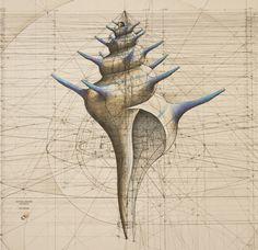 Раковина и последовательность Фибоначчи