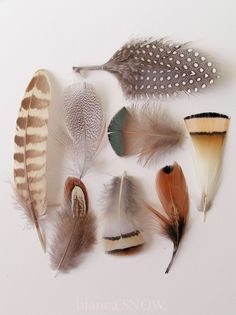 Beautiful collection of bird feathers! Feather Art, Bird Feathers, Indian Feathers, Watercolor Feather, Paper Feathers, Coloured Feathers, Watercolour, A Well Traveled Woman, Wings