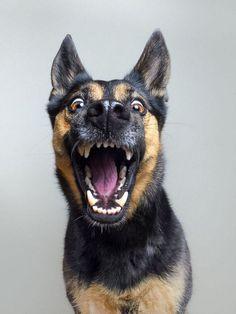 retratos-expressivos-de-cães-1