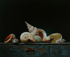 "Roman Reisinger ""Still Life With Shells by Plum leaves St Mathew, Shell Animals, Dutch Still Life, Still Life Artists, Seashell Painting, Painted Shells, Still Life Oil Painting, Shell Art, Vanitas"