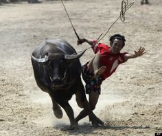 Annual water-buffalo race gets underway in Thailand