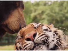 Which Unlikely Animal Pair Best Represents Your Relationship? http://ift.tt/1VwJA0G  #Animals Cats Cute Dogs Love