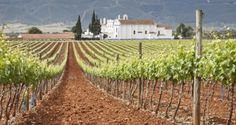 The Alentejo is a vast arid region, historically best-known for growing wheat and cork oak trees