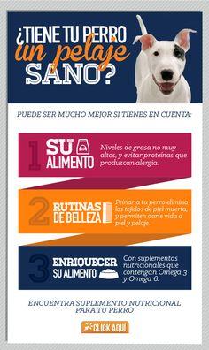 Mantener la salud de la piel y el pelaje de tu perro evita problemas como alergias.