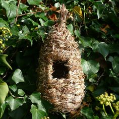 Bird Nesting Pocket
