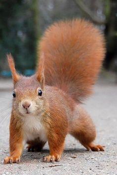 animals, outdoors, squirrels