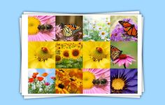 The Best Photo Collage Maker